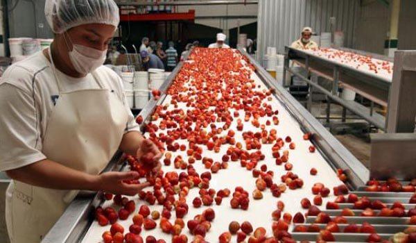 Mersa Maquinaria y Útiles de Limpieza - Industria Alimentaria - Industria Fresas